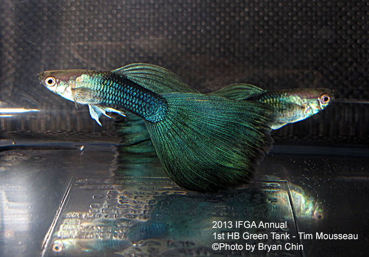 HB Green Guppy Tank