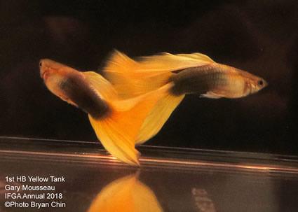 guppy, half black, yellow