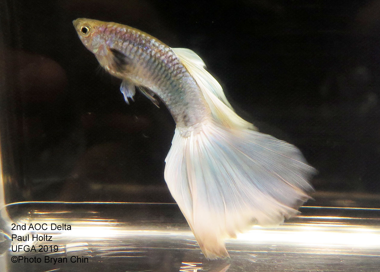 white guppy aoc